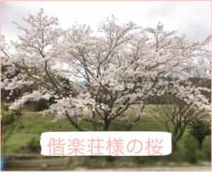 薬王寺温泉偕楽荘の桜