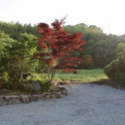 こんさい館の庭の風景