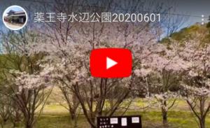 薬王寺水辺公園の動画