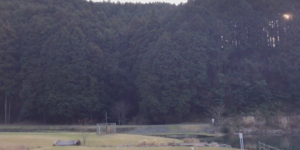 薬王寺水辺の公園の自然ゾーン