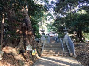 ムーミンの木(樹齢1000年大楠)