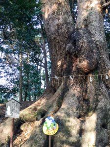 ムーミンの木
