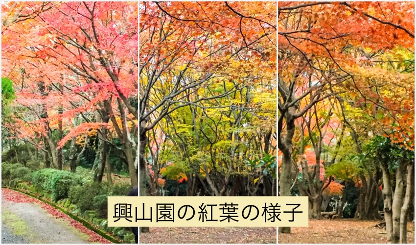 興山園の紅葉の様子