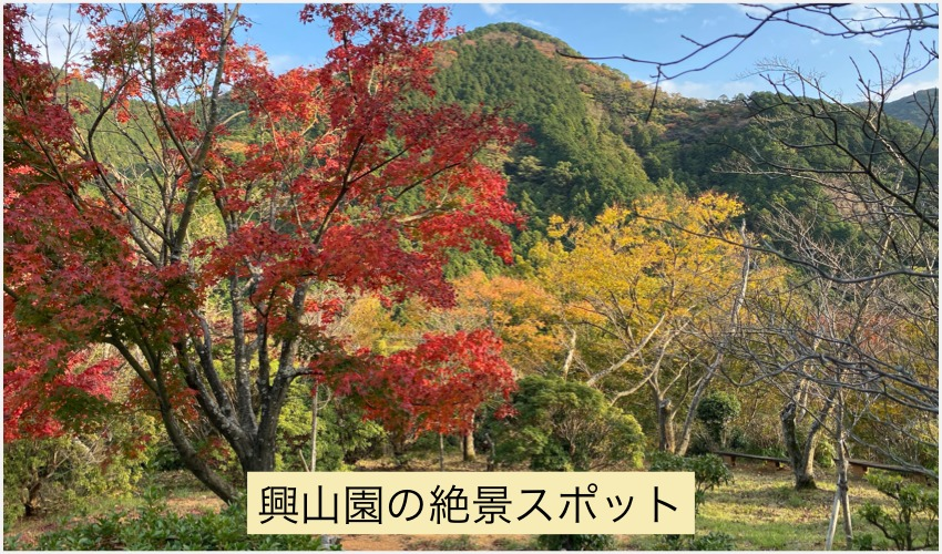 興山園の紅葉、古賀市