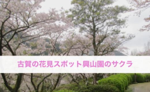 興山園の桜は花見の名所