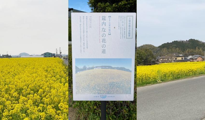 古賀市都市景観賞の筵内なの花畑
