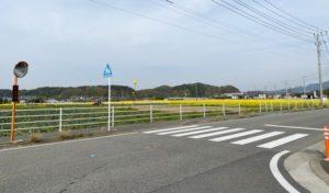 福岡県馬術場前の菜の花畑