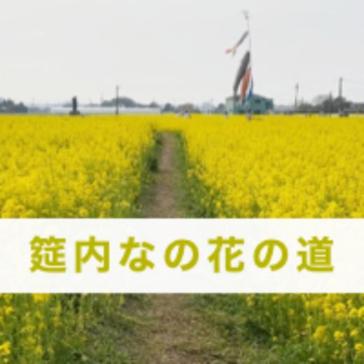 筵内なの花の道