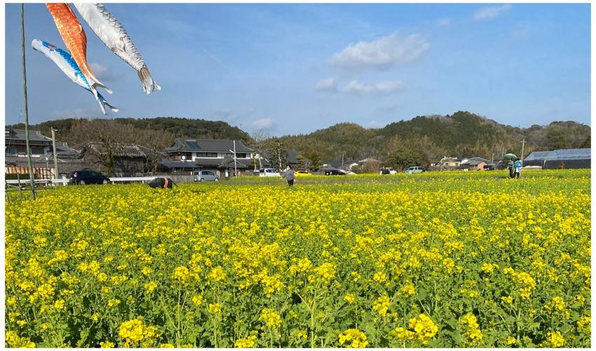古賀市筵内菜の花の道